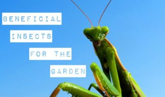 Beneficial Gardening Insects