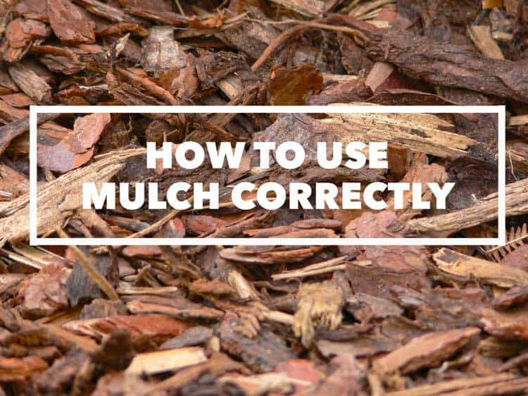 Guide To Using Mulch The Right Way