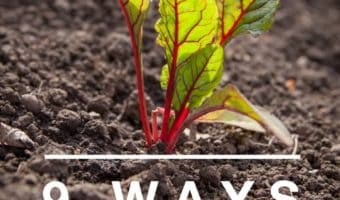 Importance of Soil Quality