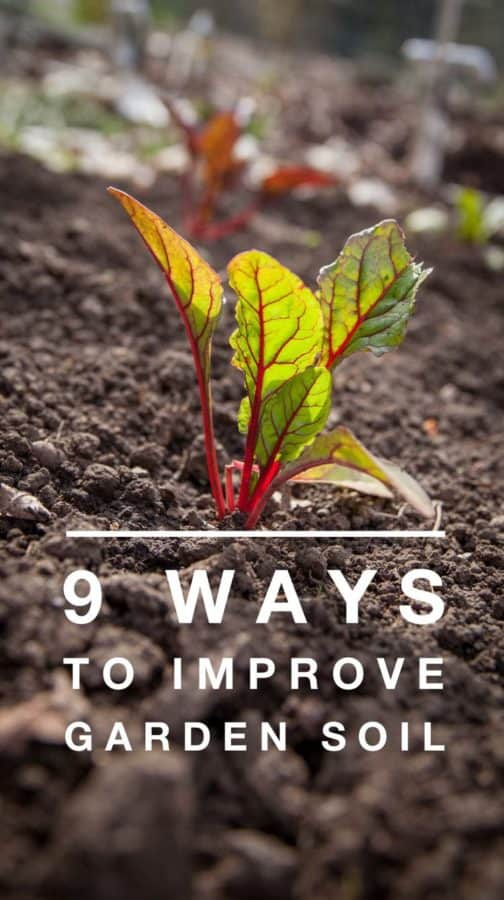 HIgh quality soil is one of the best ways to guarantee vegetable gardening success. Learn how to improve your garden soil.