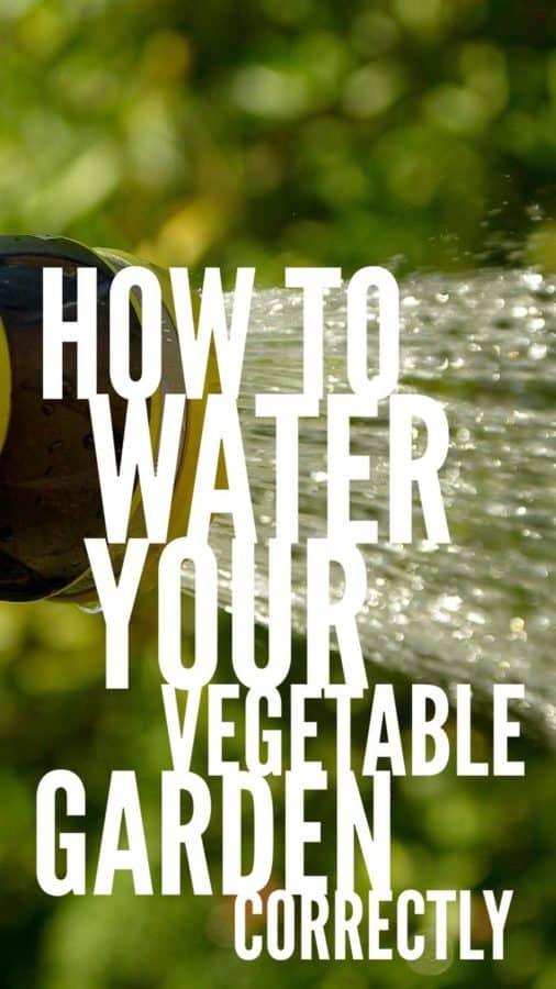 water vegetable garden the right way pinterest pin