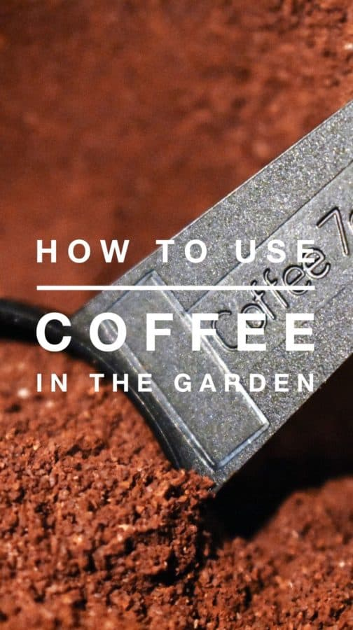 Using coffee in the garden