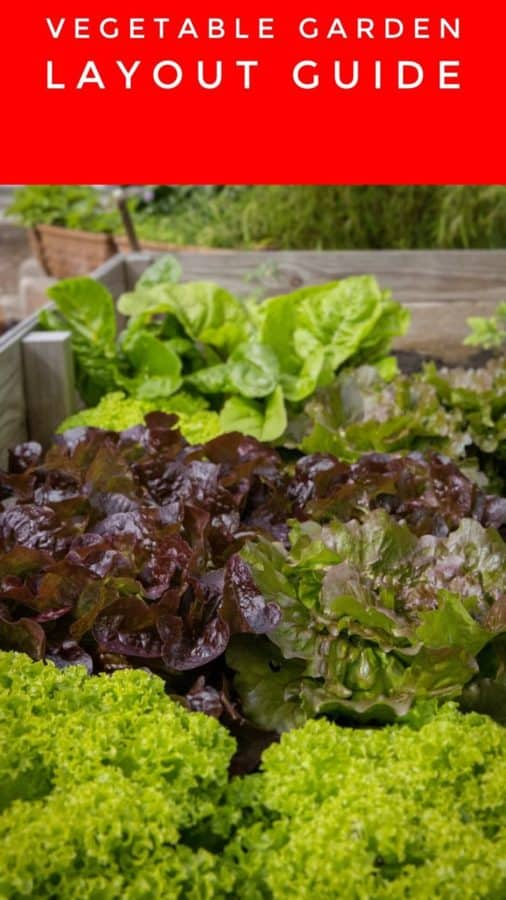 how to set up vegetable garden