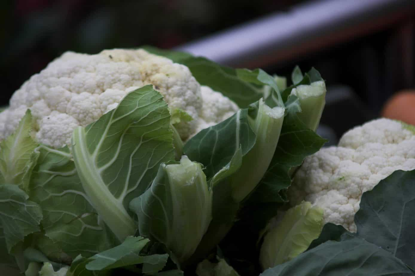 how to grow cauliflower seeds