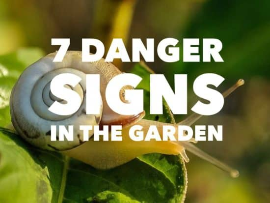 Warning Signs in the Garden from Pests