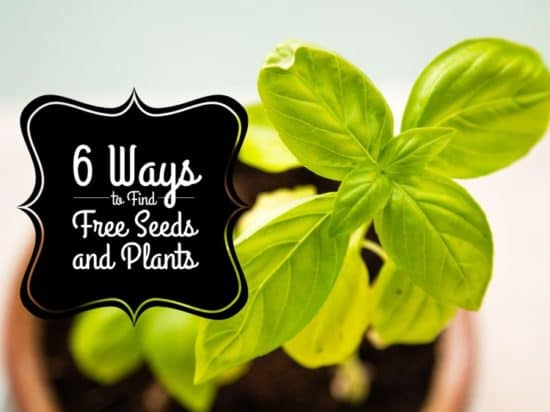 Finding Cheap and Free Garden Plants