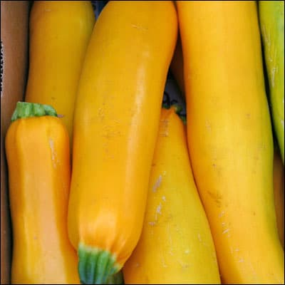 What to Do About Squash Vine Borers