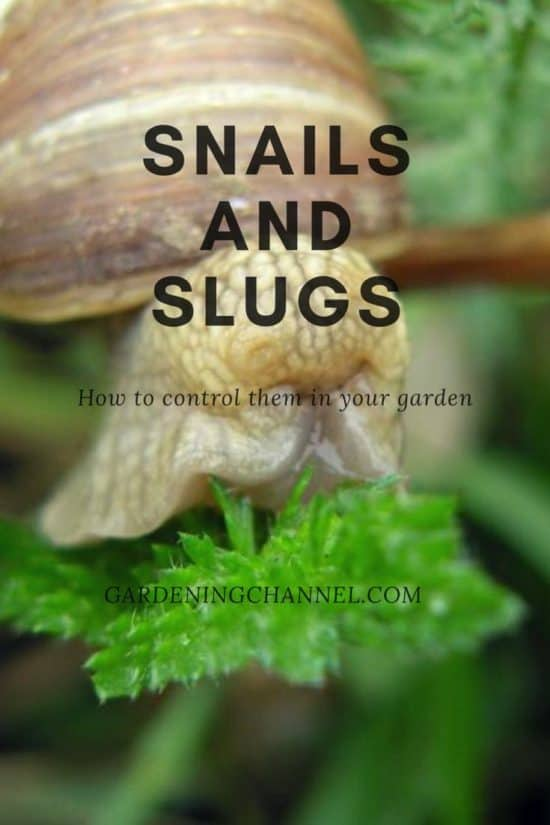 snail and slug control vegetable garden