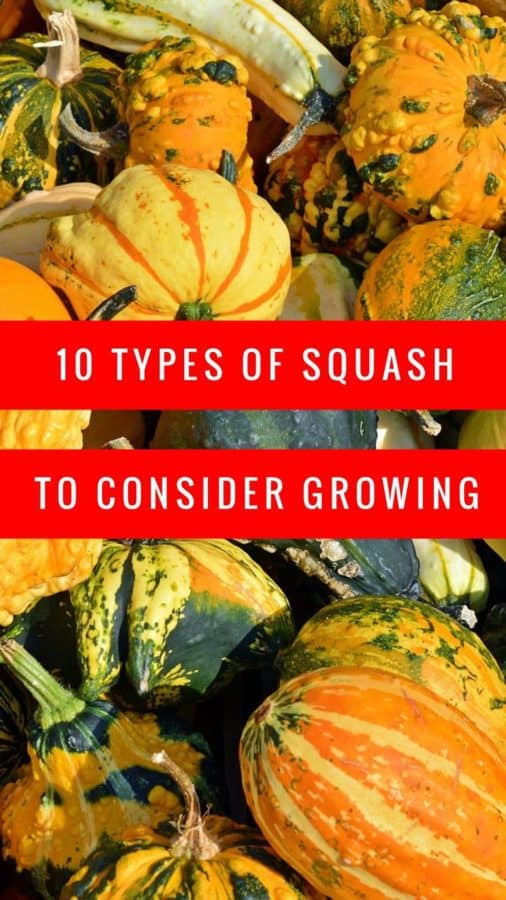 Grow one of these types of squash
