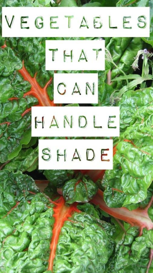 vegetables that can handle shade
