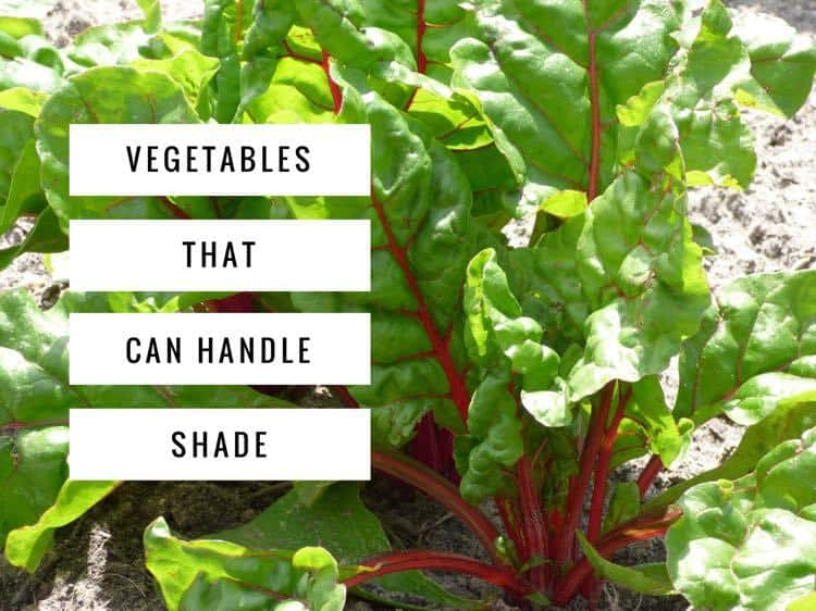 Shade Vegetables Try These 10 Options