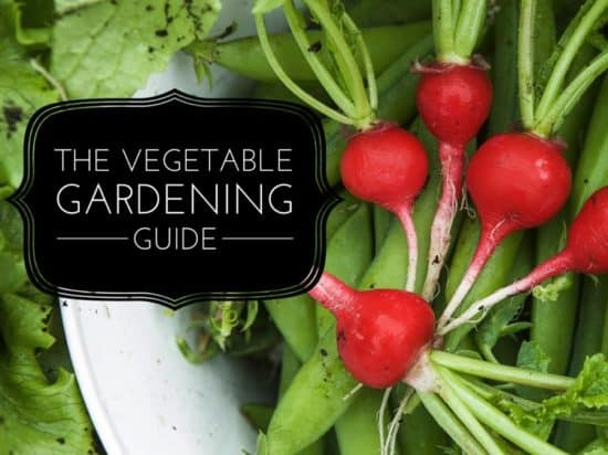 Guide to Growing a Home Vegetable Garden