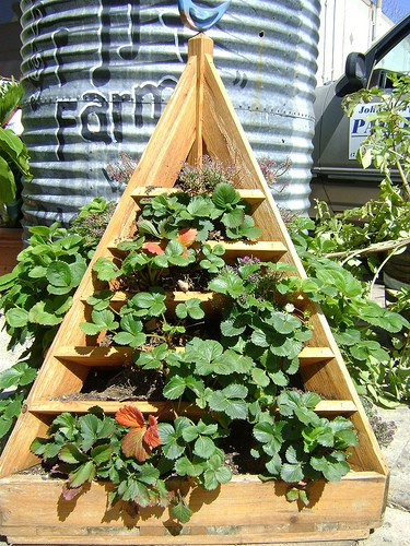 How To Build A Strawberry Planter Tips And Plans