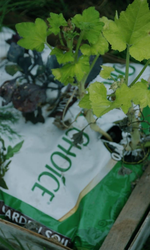 Plant a Small Garden In a Bag of Soil