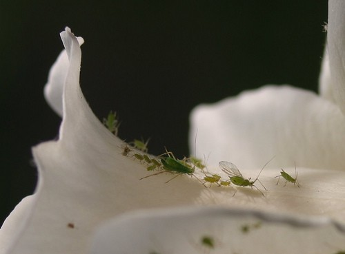 Houseplant Bugs: Identification and Control