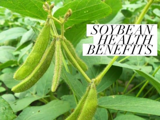 Health Benefits of Soybeans