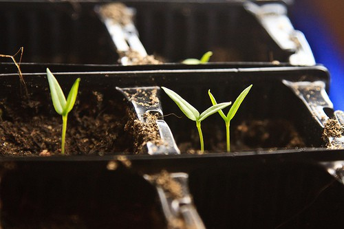 Make Your Own Seed Capillary Mat: Self Watering Trays