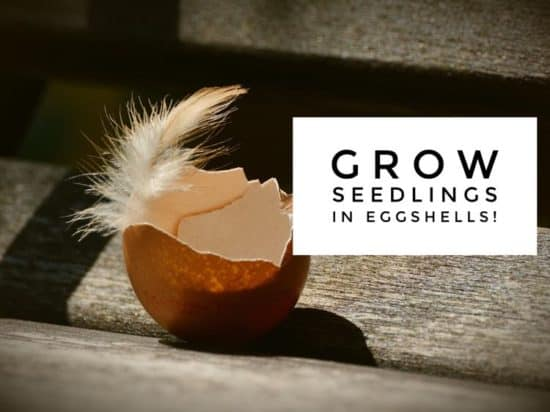 grow seedlings in an eggshell