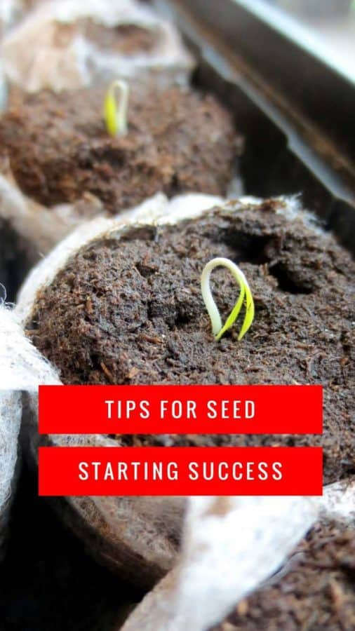 seed starting tips for success pinterest pin