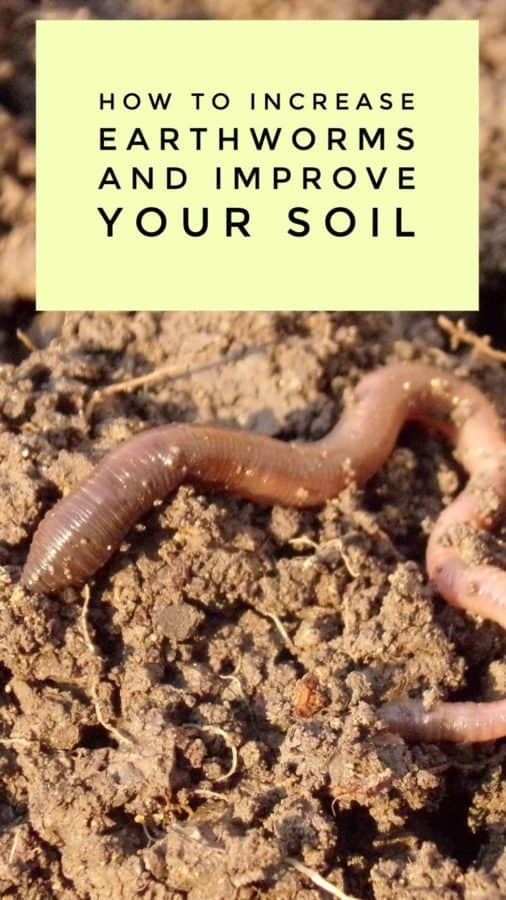 How to get more earthworms in your garden