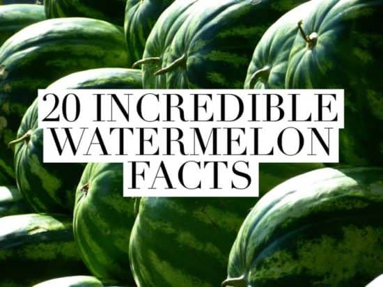 cool watermelon facts