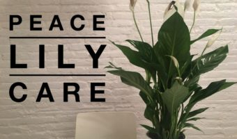 Peace Lily Care: How to Grow Peace Lily Plants Successfully at Home
