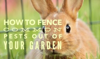Garden Fencing: A Roundup of the Best Ideas
