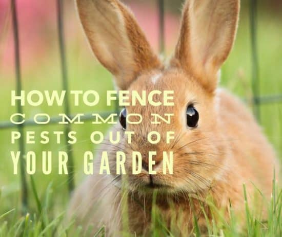 Garden Fencing A Roundup Of The Best Ideas