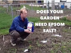How to use epsom salts in your home garden for How to use epsom salt in garden
