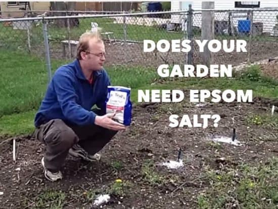 How To Use Epsom Salts In Your Home Garden