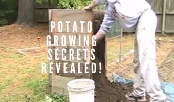 Growing Potatoes in Containers: A Roundup of the Best Ideas