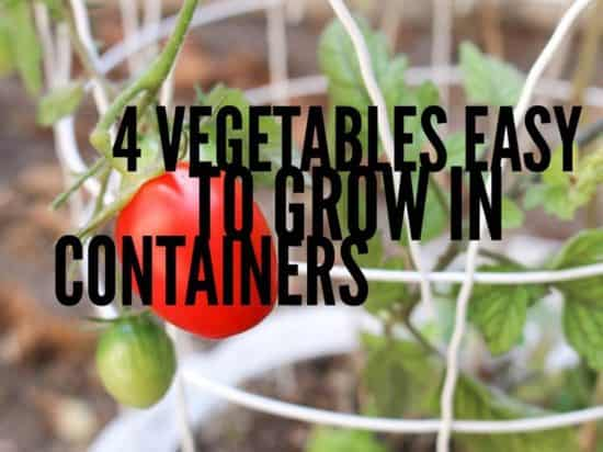4 easy to grow container vegetables