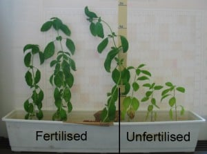 Image Result For Home And Garden Fertilizera