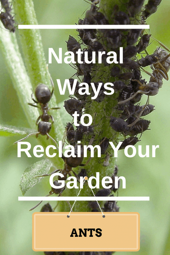 How To Get Rid Of Ants In My Garden Beds