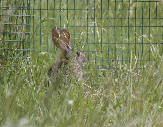4 Humane Ways to Keep Rabbits Out Of The Garden