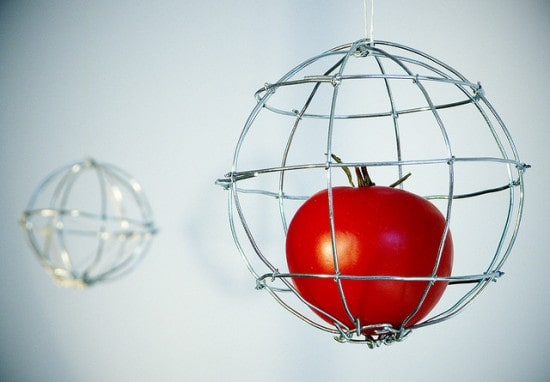 6 Ways to Build Your Own Tomato Cages Tomato-Cage-550x382