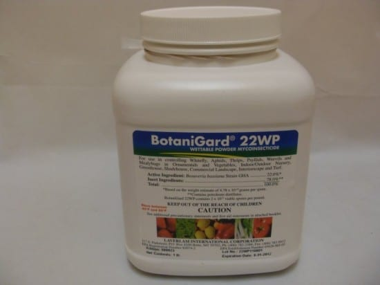BotaniGard for aphid control