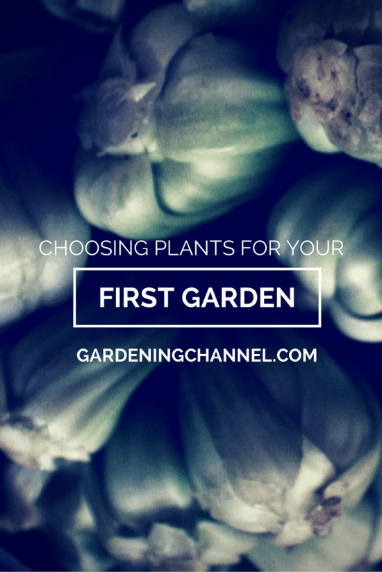 Choosing plants for your