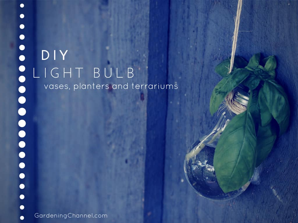 DIY: Recycle Light Bulbs for Vases, Flower Planters and Terrariums