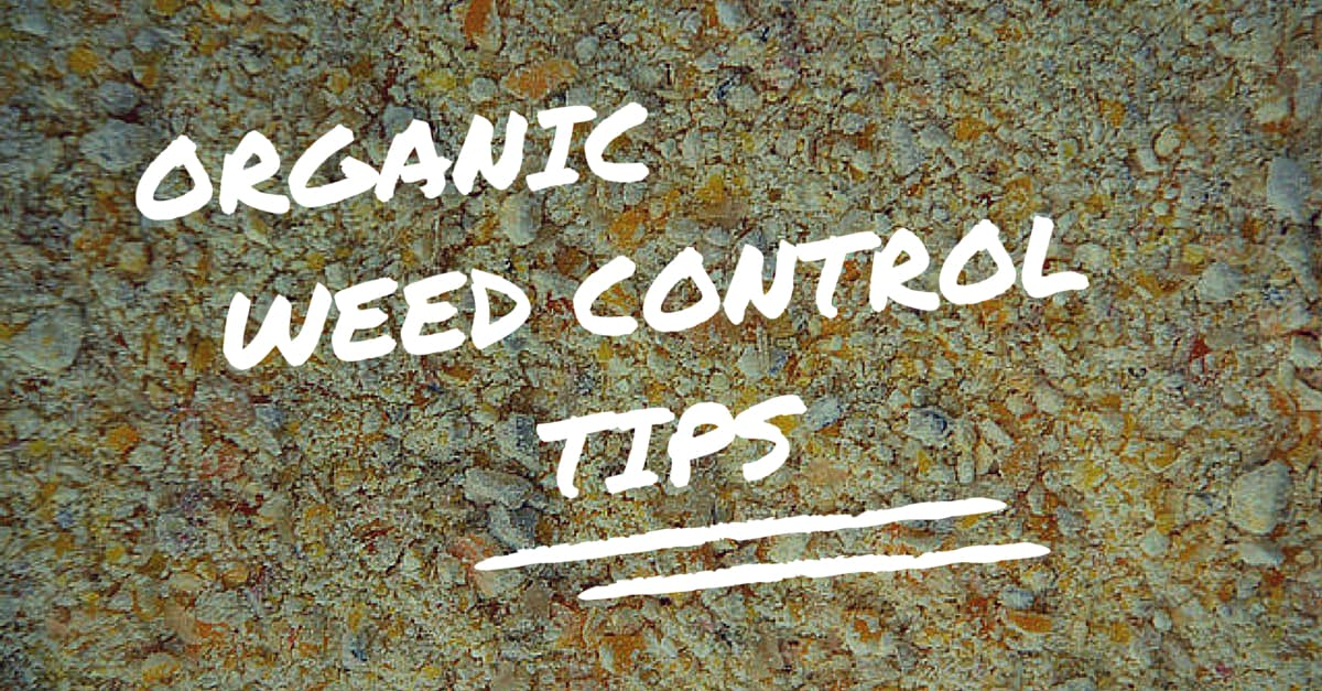 Organic Weed Control Tips: Including 3 Organic Weed Killers That Are Safe for You and Your Garden's Soil Health