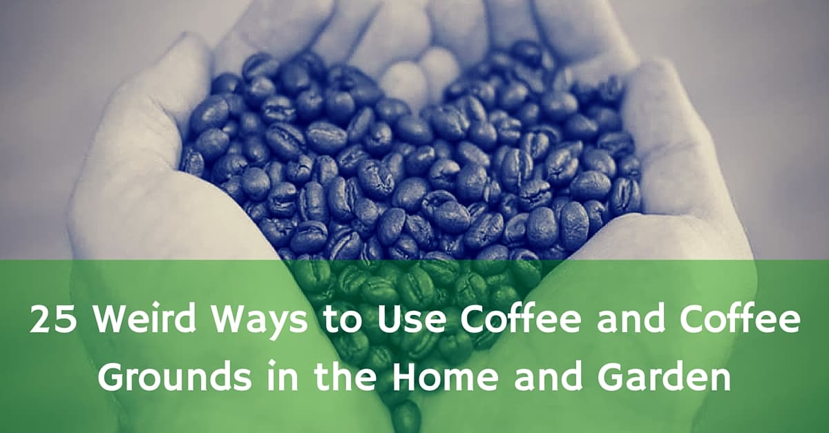 25 ways you probably aren 39 t using coffee and coffee grounds for How to use coffee grounds in garden