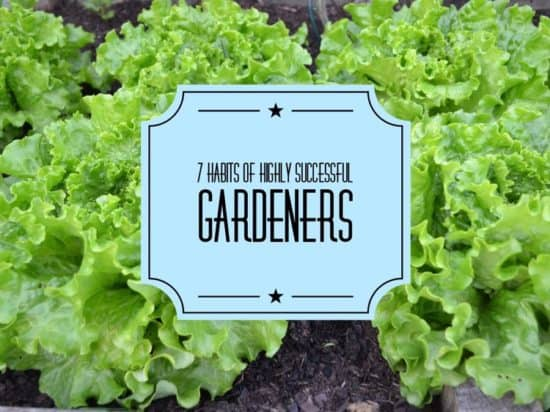 7 habits of successful gardeners