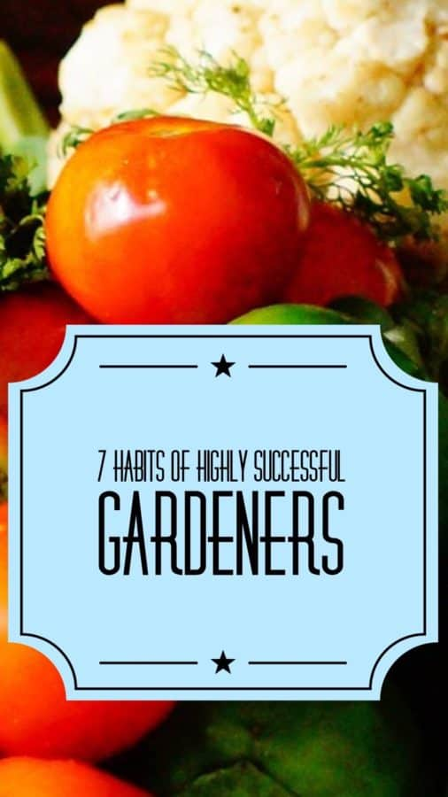successful vegetable garden guide
