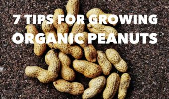 7 Gardening Tips for Growing Organic Peanuts