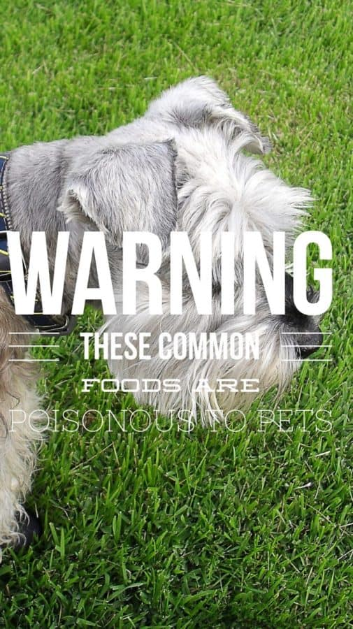 Foods that are Poisonous to Pets