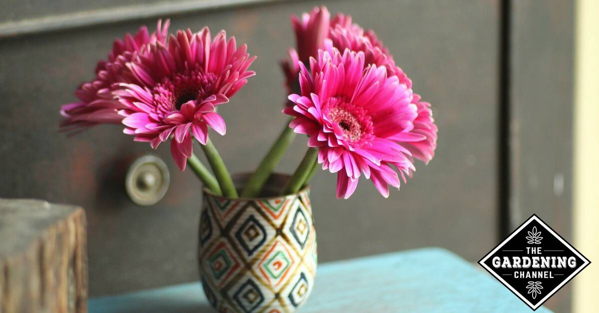 How To Help Fresh Cut Flowers Keep Longer Gardening Channel