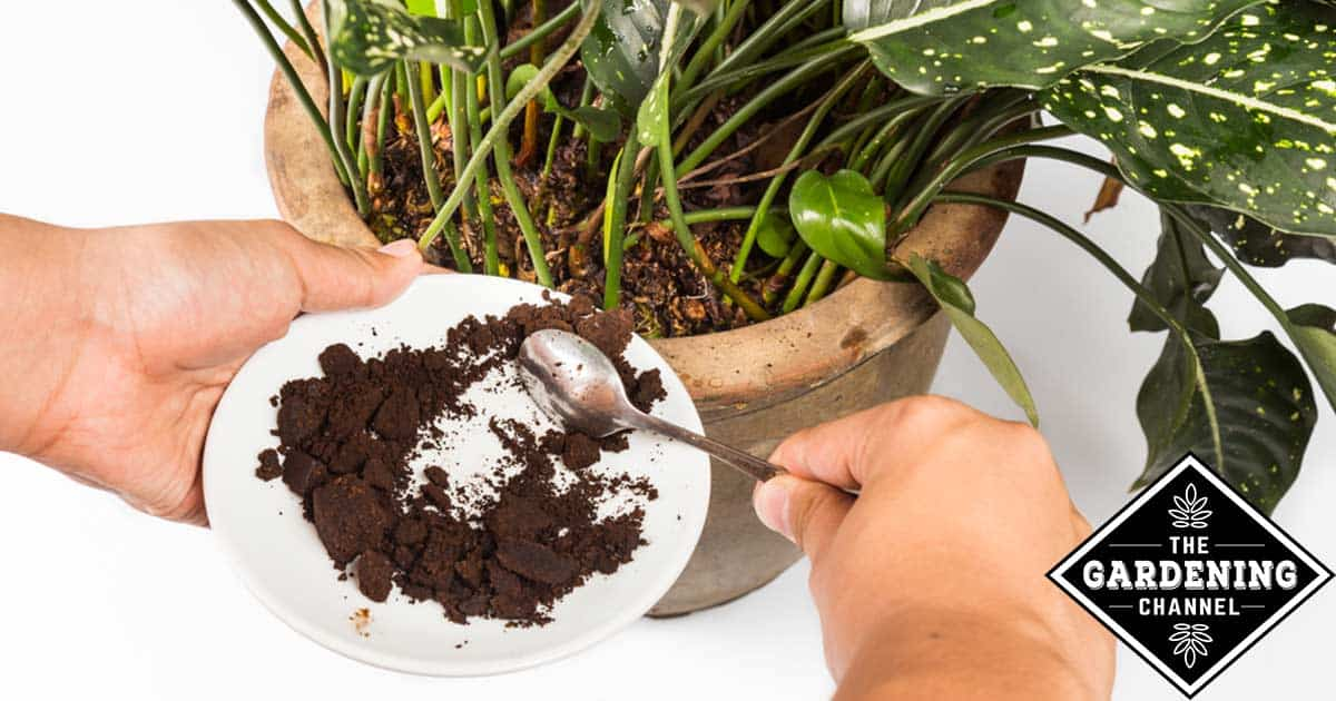How To Make Potting Soil With Eggshells And Coffee Grounds Home Grown Fun