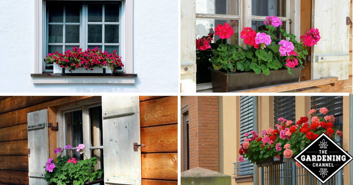 7 Plants For Shady Window Boxes - Gardening Channel