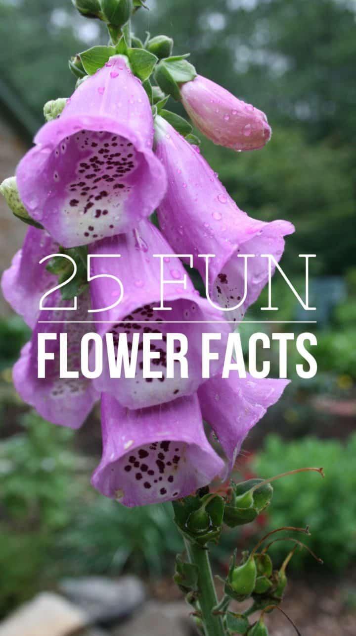 Fun Flower Garden : Fun facts about flowers gardening channel
