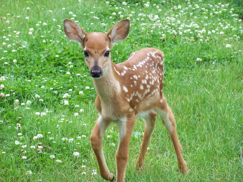 Deer Proof Plants Gardening Channel